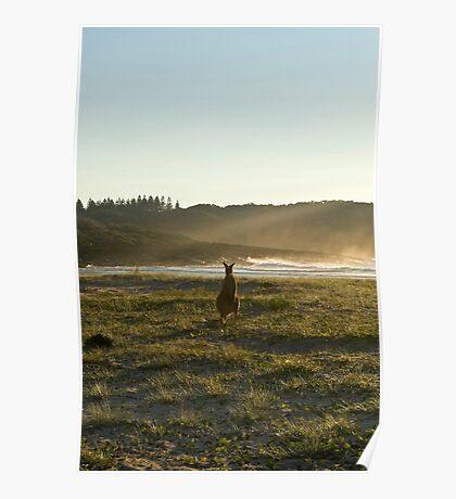 Kangaroos 2 Poster