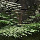 Tree Fern Fronds by Sea-Change