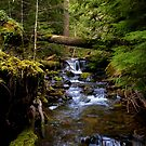 The Headwaters Of Quartzville Creek by Charles & Patricia   Harkins ~ Picture Oregon