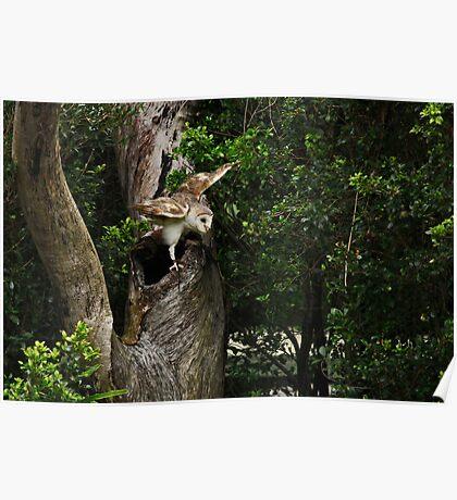 Australian Owl Poster