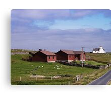 Blueberry Shetlands Canvas Print