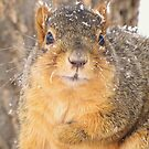 One Frosted Squirrel by lorilee