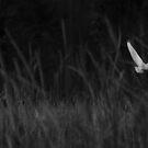Great Egret - Ardea alba by Matsumoto