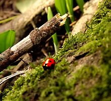 First ladybird of spring! by ThePigmi