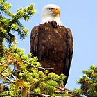 Eagle Totem iphone case by Randy Giesbrecht