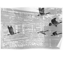 B&W Geese In Flight Poster