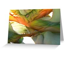 Aloe Abstract Greeting Card