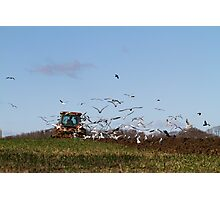 Ploughing the land Photographic Print