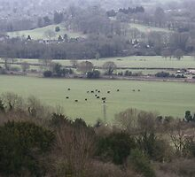 Countryside Shapes by Lennox George