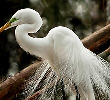 Great White Egret On The Nest by Joe Jennelle