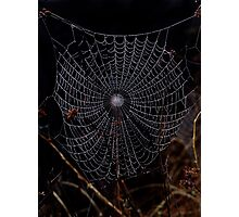 Cobweb Photographic Print