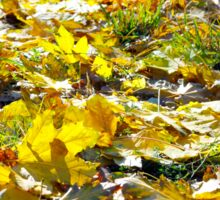 Selective focus on the yellow maple leaves on the lawn Sticker