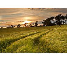 Barley Field Sunset Photographic Print