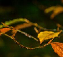 Beech Leaves in autumn Sticker