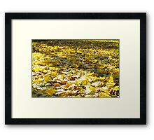 Selective focus on the leaves with a blurred background Framed Print