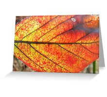 Sunlit Leaf Greeting Card