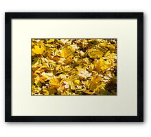 Selective focus on a set of yellow autumn fallen maple leaves Framed Print
