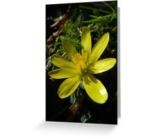 Sunny Meadow Greeting Card