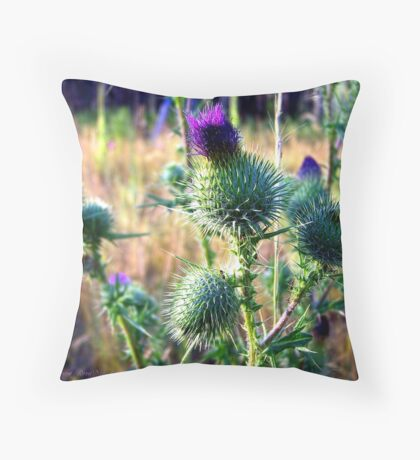 Canadian Thistle Throw Pillow