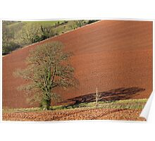 Tree and red Devon soil Poster