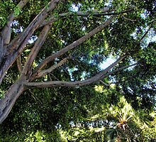 Nekkie Tree by GolemAura