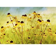 Summer Breeze Photographic Print