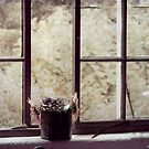 By the Window by Margi