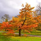 The Autumn Tree by Fern Blacker