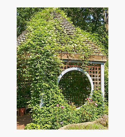 Garden Shed in Herb Garden Photographic Print