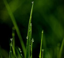 Grass by Annie Lemay  Photography