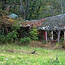 Old Haunted Abandonned Building Behind the Ringwood Manor by Jane Neill-Hancock