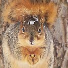 Squirrel Tail Cap by lorilee
