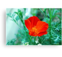 Poppy in the Garden. Canvas Print