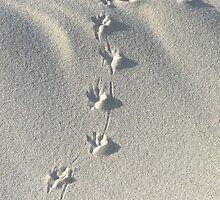 """""""Bird Tracks Make a Cross"""" by waddleudo"""