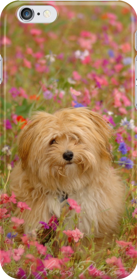 Where is Gizmo? - I Phone Case by Annie Lemay  Photography