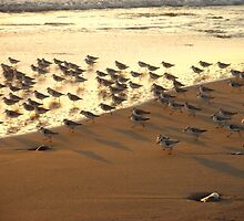 """Snowy Plover Convention"" by waddleudo"