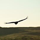 On the Wing by benjraynor