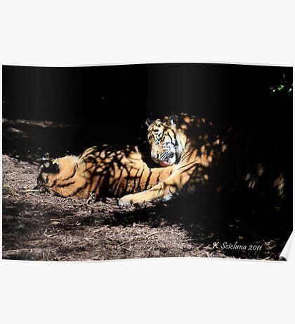 Tasty tigers Poster