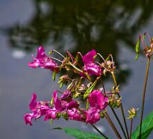 Wildflowers by the stream by tunna