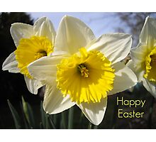 Easter Daffodils Photographic Print