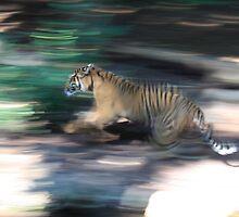 Running by bluetaipan