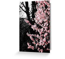 Blooming Lovely Greeting Card