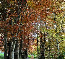 Autumnal beauty by Ulo Pukk
