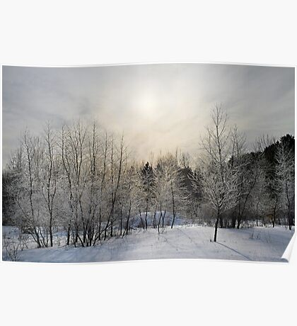 Winter at Mer Bleue. Poster