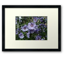 Colour me Purple Framed Print