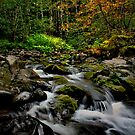 It Makes Me Smile ~ Calapooia River ~ by Charles & Patricia   Harkins ~ Picture Oregon