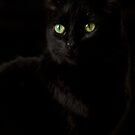 Black Silk by Megan Noble