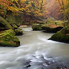 Fall Stream by Martin Rak