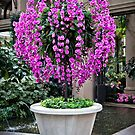 Orchid Tree by Ann J. Sagel