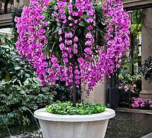 Orchid Tree by Ann J. Sagel